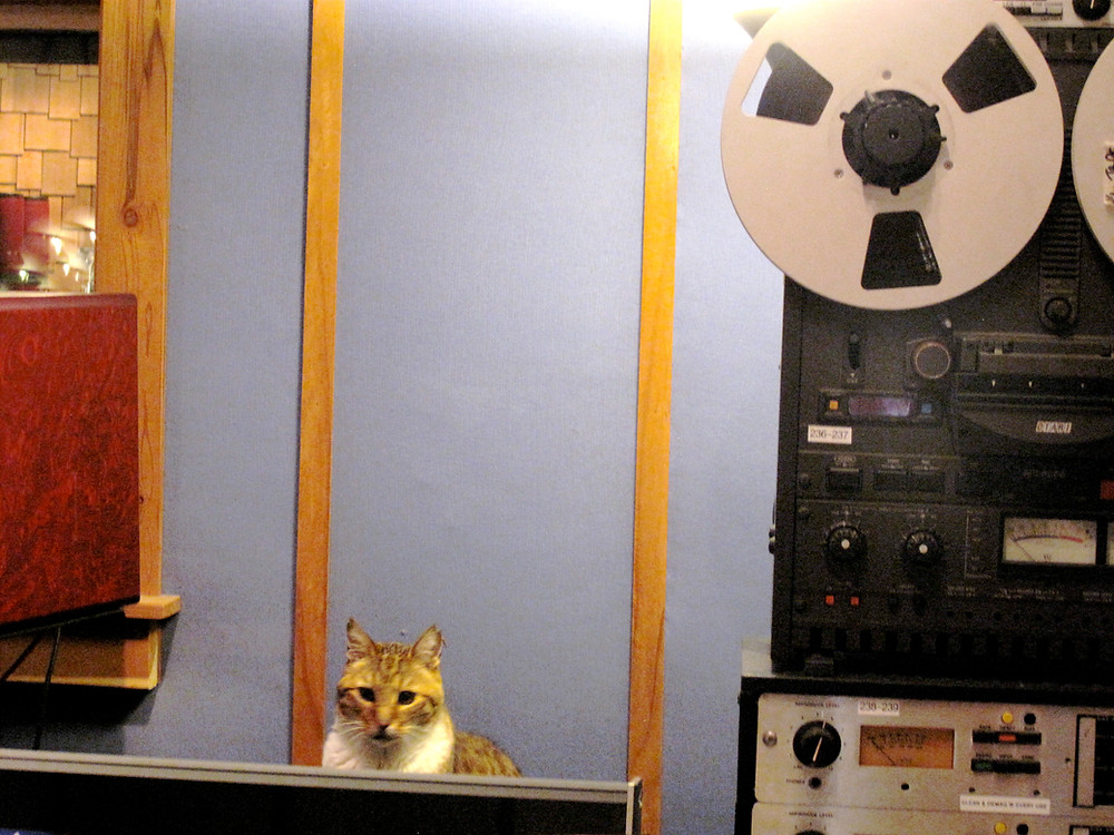 Marvin the studio cat at Tiny Telephone_Megan Johns Recording