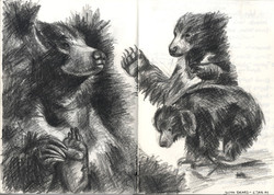 SKETCH: SLOTH BEAR