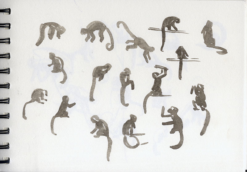 SKETCH AT THE ZOO: GIBBON