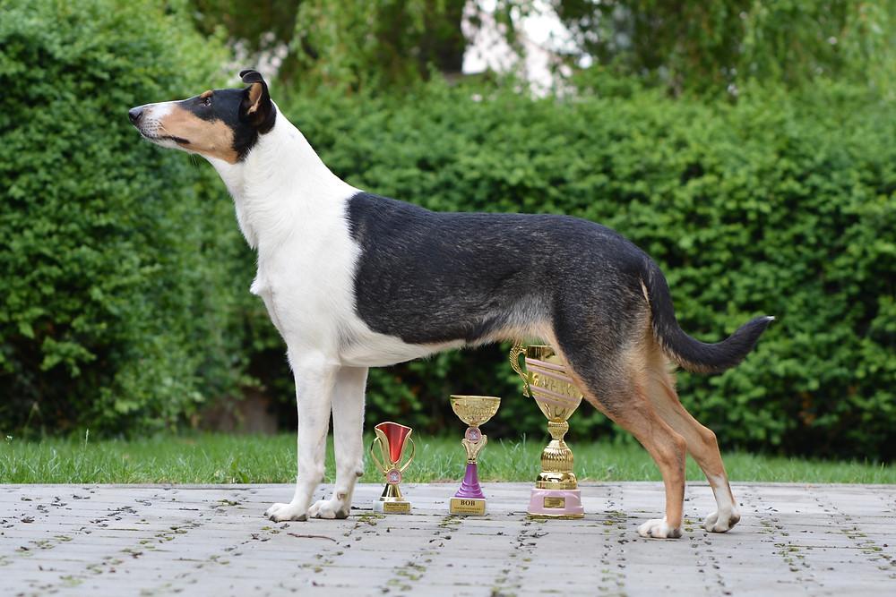 Viki -  Airelle en noir Lago Benea - EX 1, CAC, CAC ČMKU, Národní vítěz, BOB a v zavěrečných soutěžích 4. BIG