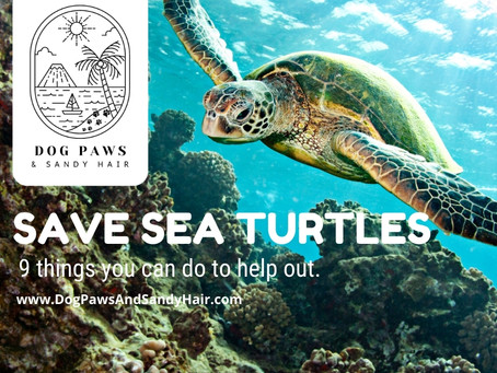 9 Things You Can Do To Protect Sea Turtles. Tambor Bay Turtle Rescue Playa Tambor-Costa Rica.