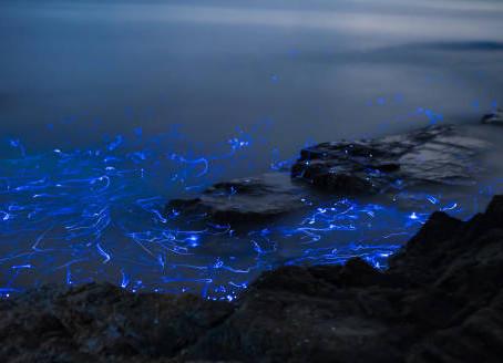 Bioluminescence Tour- Nicoya Peninsula, Costa Rica