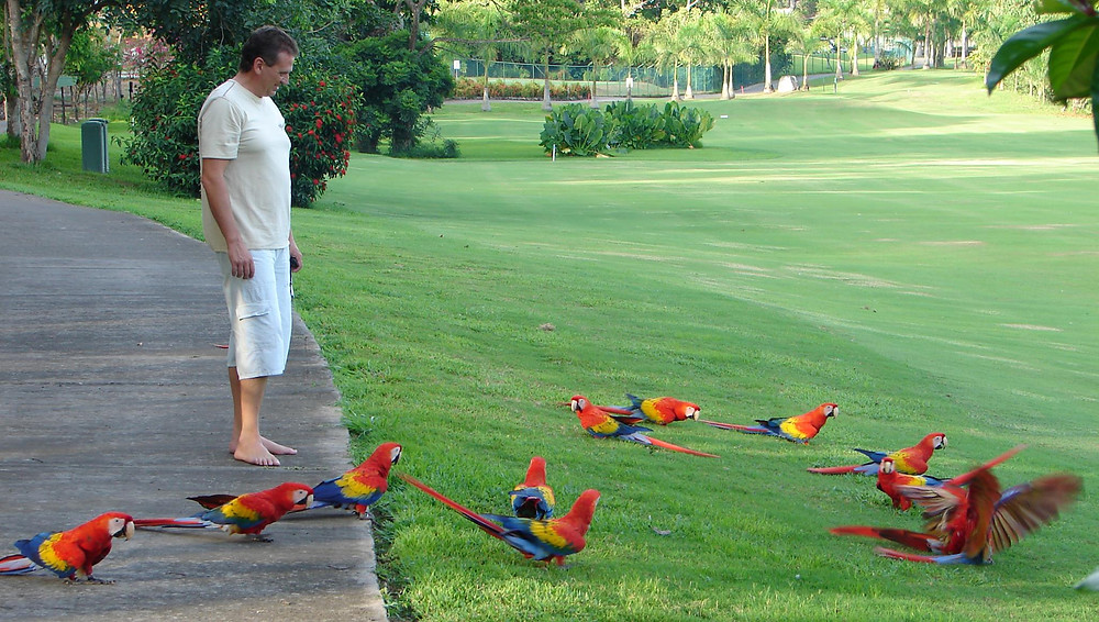 Scarlet Macaw sanctuary in Costa Rica