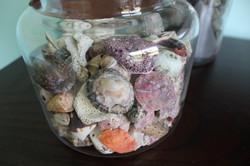Sea Shells -La Casa Azul
