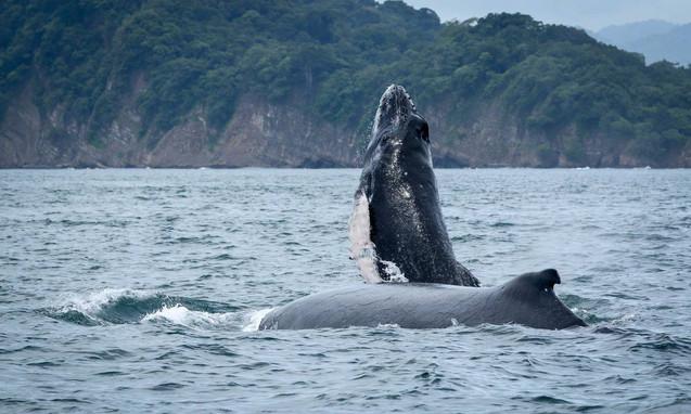 Bahi Ballina -Whale Bay Costa Rica