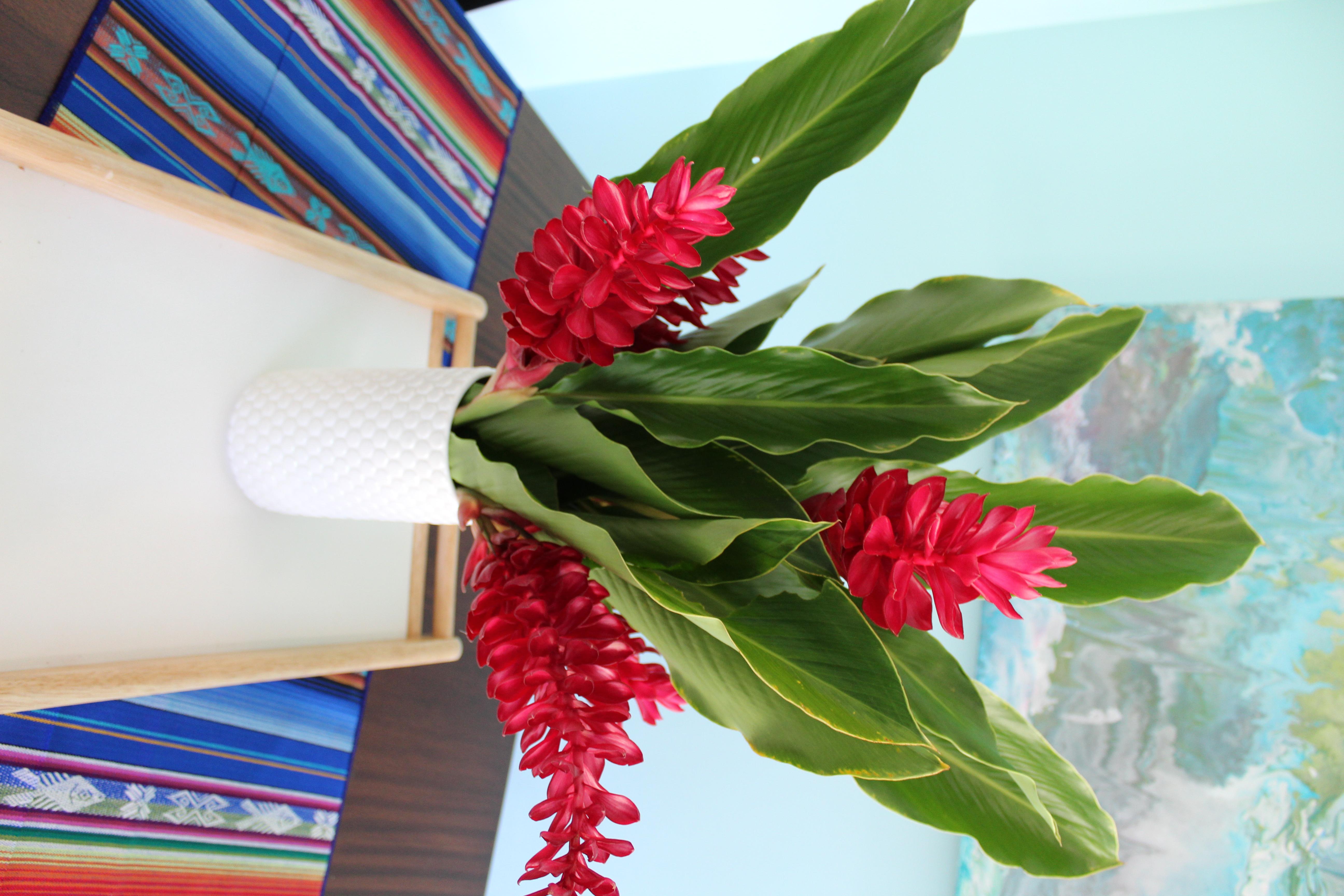 Ginger Plant -La Casa Azul Costa Ric