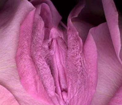 Genital Honoring
