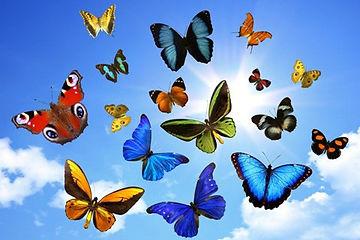 papillonENVOL.jpg