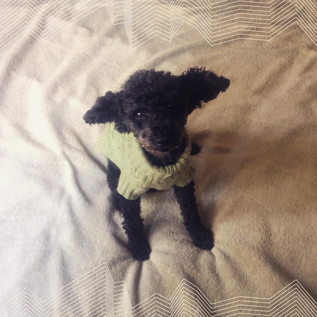 herman sweater ears