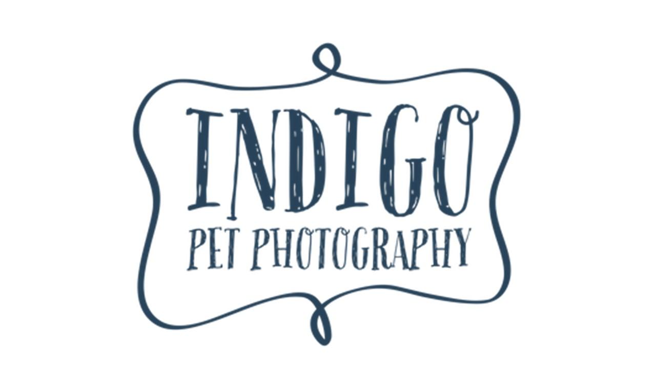 Indigo Pet Photography