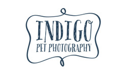 Indigo Pet Photography