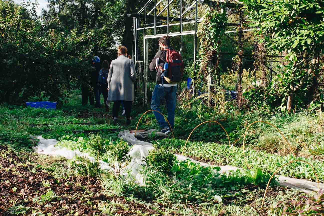 person-standing-near-greenhouse-1084543.