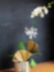 orchid 1.jpg