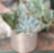 succulent .jpg