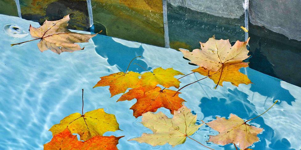 leaves-in-water.jpg
