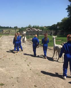 Kinderfeestje alpaca's