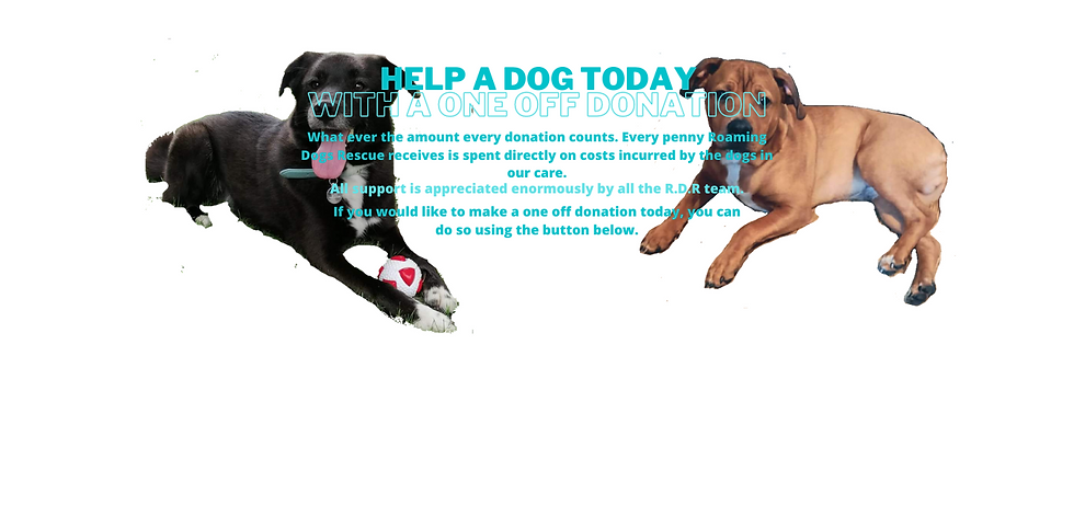 help a dog today homepage (6).png