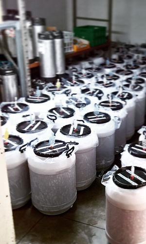 Beer fermenting