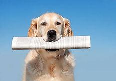 Pets 4 G.I.s - Delivering News and Media