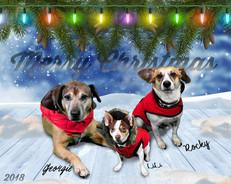 Pet Photography / Greenscreen