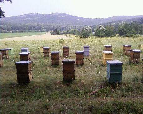 Nuts4Honey Bee Hives
