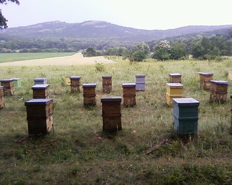 Nuts4Honey Bee Hives