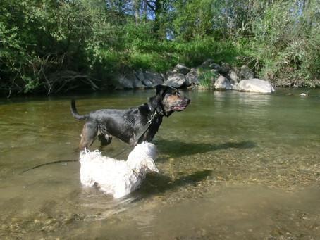 Hunde im Sommer