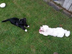 Lila & Filou