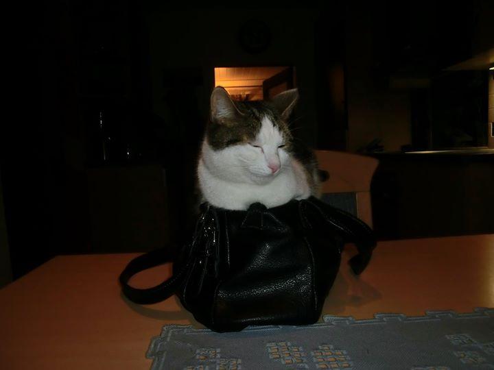 Pako liebt Taschen!