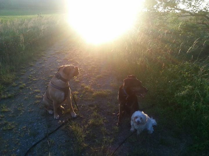 in den Sonnenuntergang spazieren