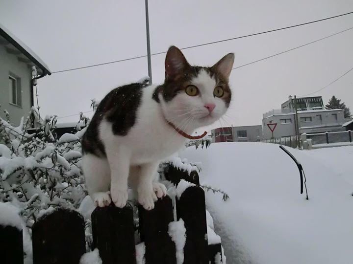 Oh Gott... Schnee!!!