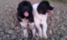 Spazieren-gehen, Gassi-geh-Service Hundeherzen Training & Ernährung für Hunde Barbara Ziegler