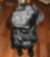 Geschenkgutscheine von Hundeherzen Training & Ernährung für Hunde Barbara Ziegler