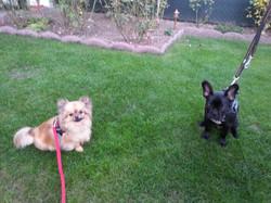 Puppy & Tyson