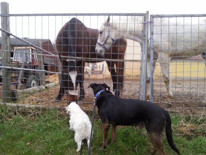 die Pferde begrüßen