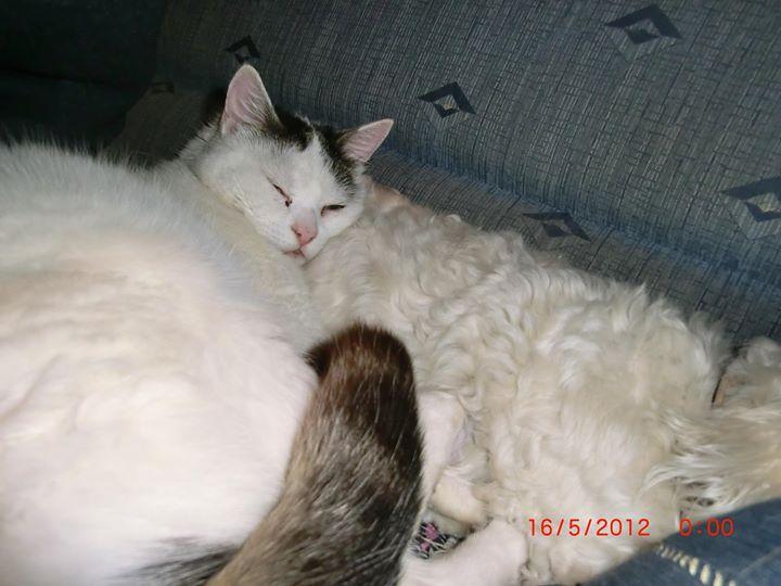 Sammy kuschelt gern mit Filou