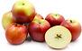 Enterprise Apple Semi Dwarf & Dwarf