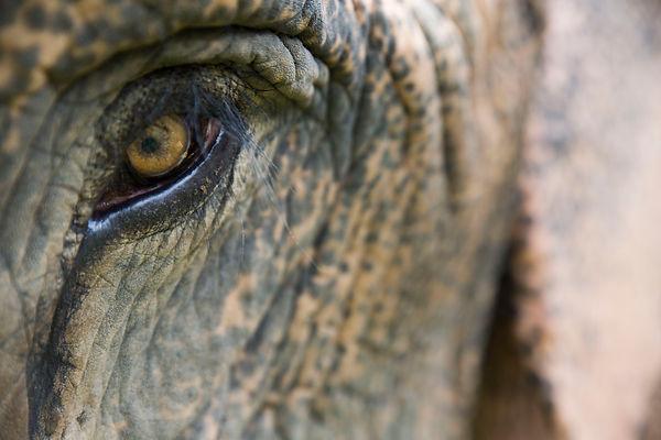 elephant eye 2.jpg