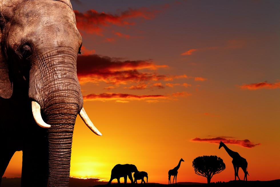 I Dream Of Africa