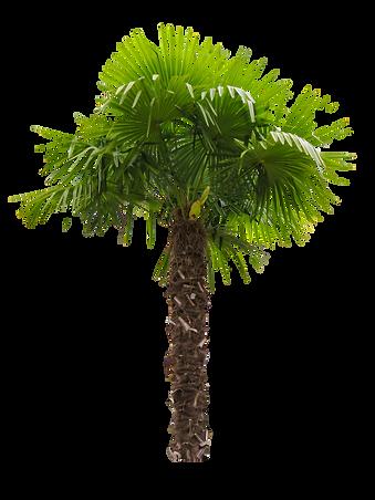 nature-palm-tree.jpeg