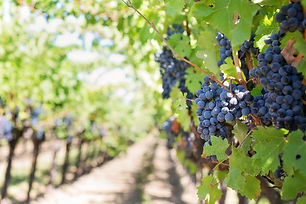 purple-grapes-553462_1920.jpg