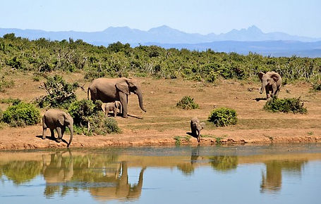 elephant-427138__340.jpg