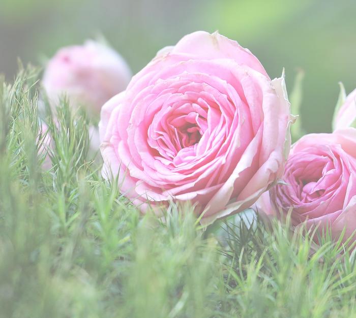 Rose Package🥀£1,010