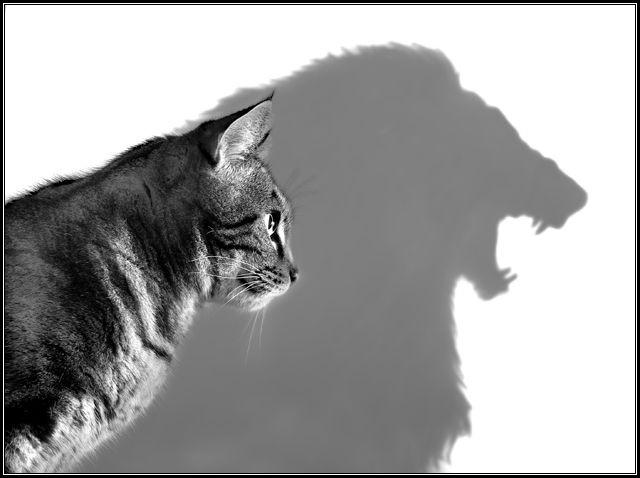 voir plus grand, chat se percevant comme un lion, spiritualité, force, moi limité, moi supérieur, essence divine, être incarné, âme, champ des possibles,