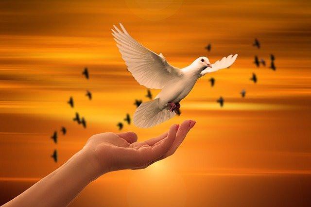 colombe de la paix qui s'envole dans le ciel nuit, amour et paix