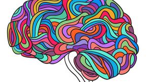 Jak uczy się ludzki mózg?