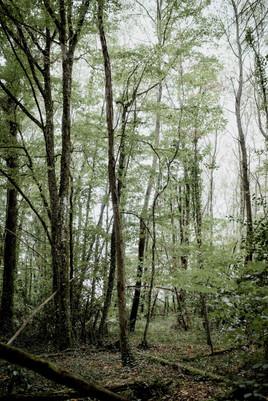 famille forêt-21.jpg