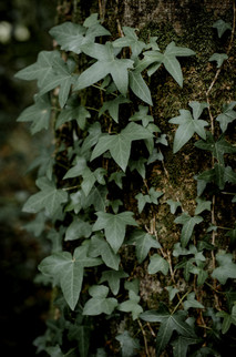 famille forêt-12.jpg