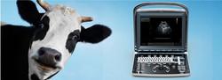 portable-veterinary-ultrasound-system-70890-7108653.jpg