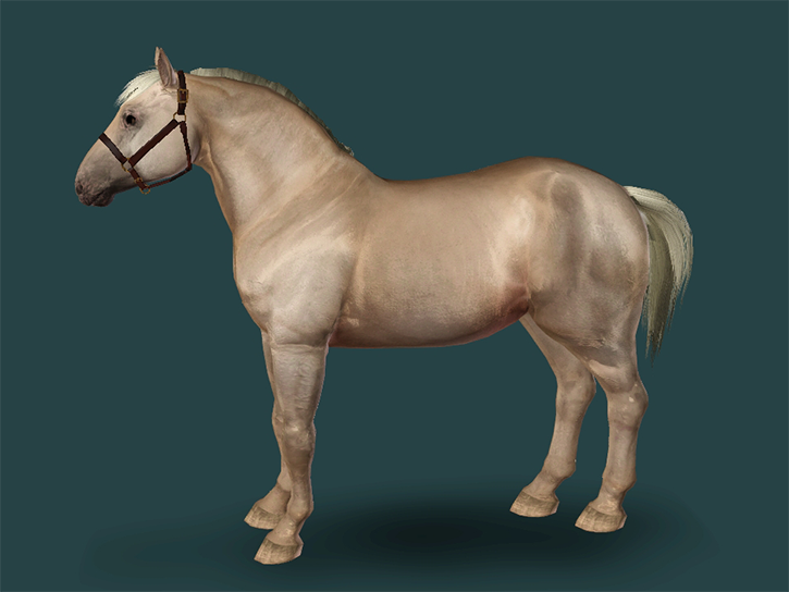 American Cream Draft Mare
